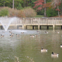image of lake with fountain and trees in background